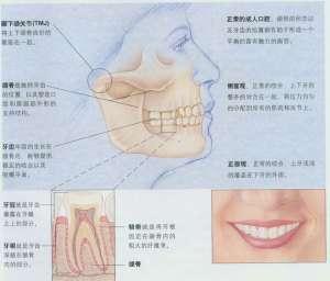 图说口腔正畸的基本原理和一般过程