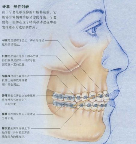 口腔结构示意图